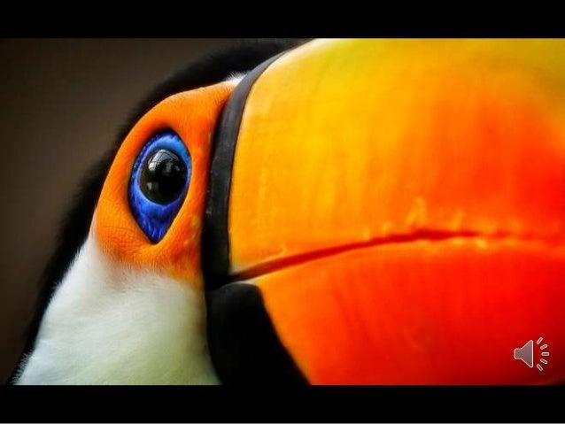Amazing Wildlife- Photographer Detlef Knapp