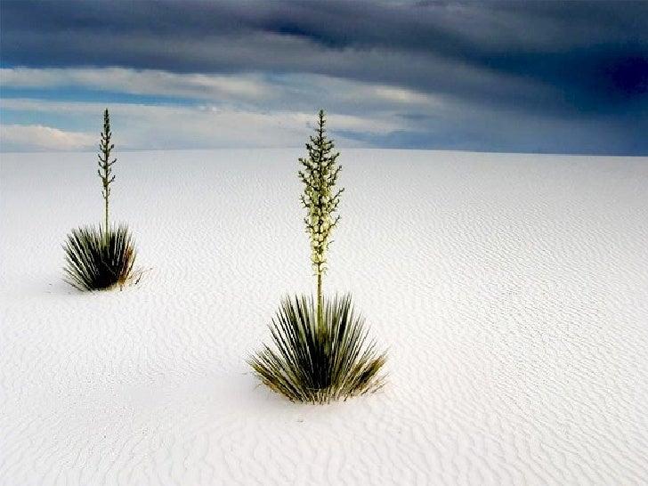 Amazing Wonderful Nature