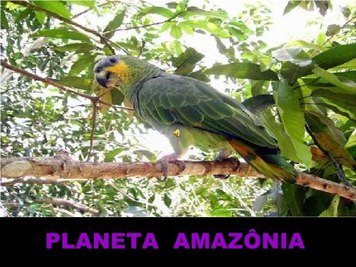 PLANETA  AMAZÔNIA