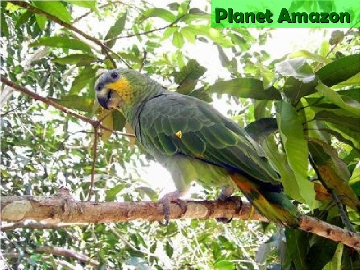 Amazonia, Loves Preserving And Respecting