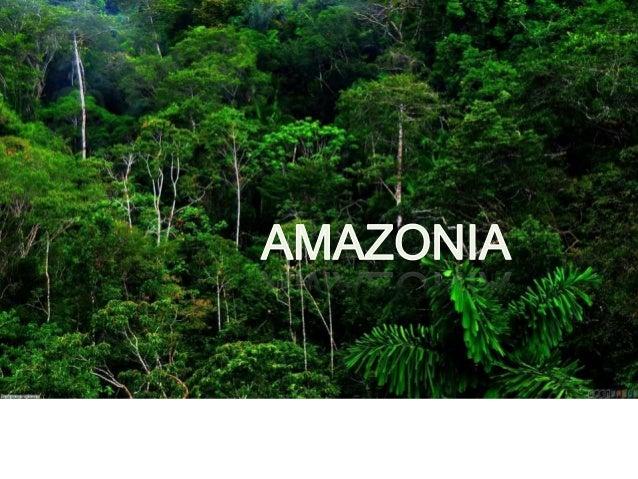 CONTENTS AMAZONIA YANOMAMI YUCUNAS MISCELLANEOUS FLOTTING VILLAGE GUARANI HOUSES BANDEIRISTA