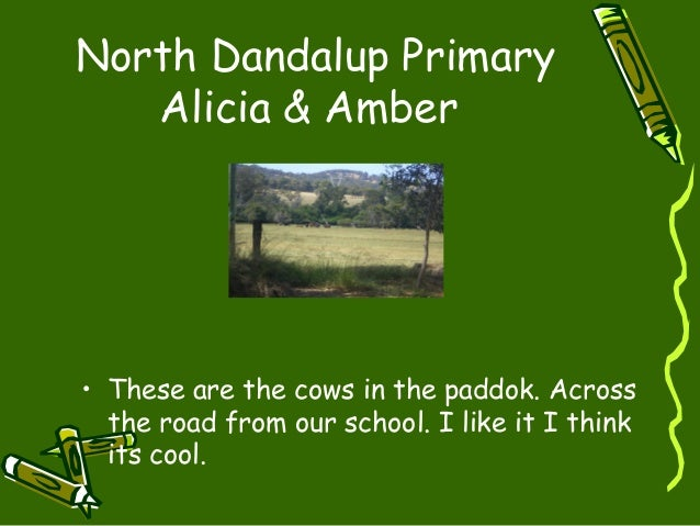 North Dandalup Primary Alicia & Amber • These are the cows in the paddok. Across the road from our school. I like it I thi...