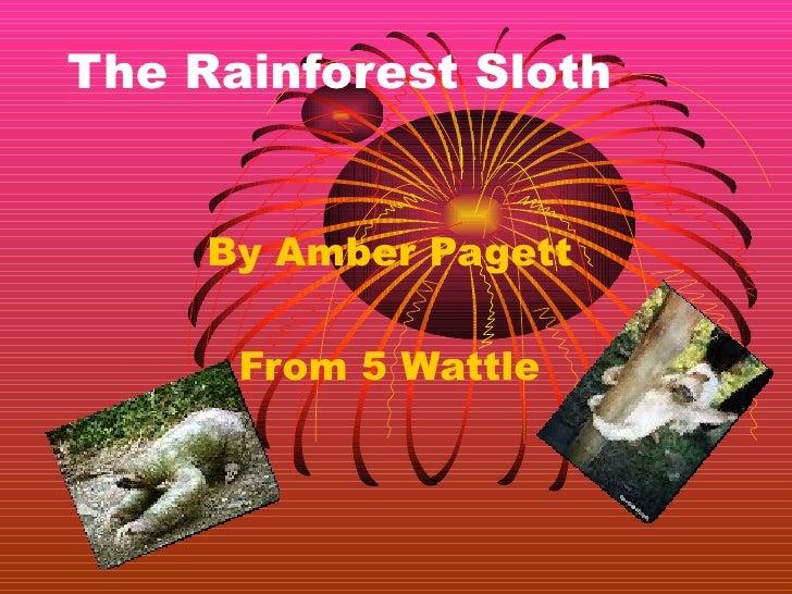 Amber p the rainforest sloth