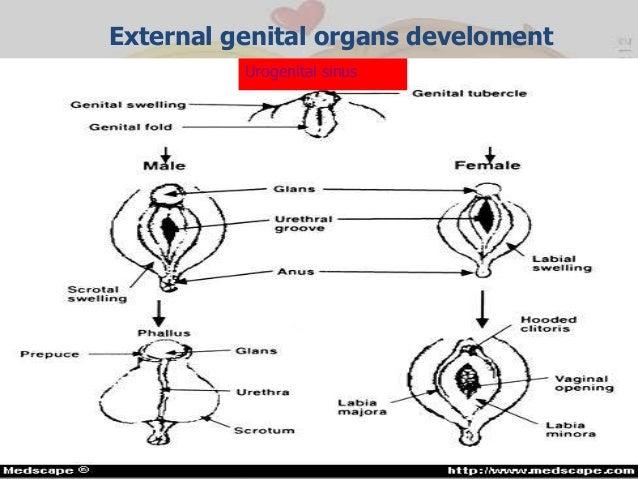 Ambiguous genitalia .....