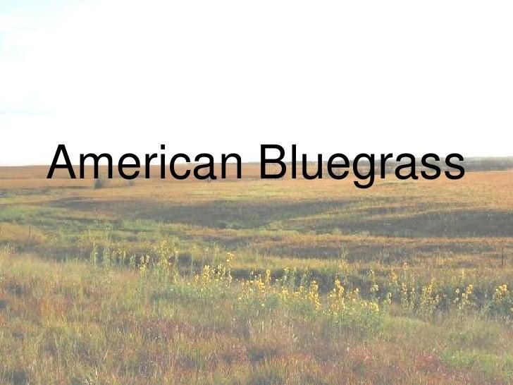 American bluegrass