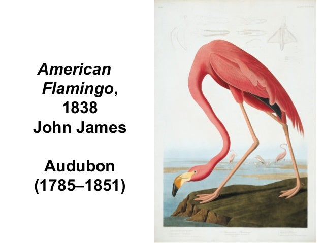 AmericanFlamingo,1838John JamesAudubon(1785–1851)