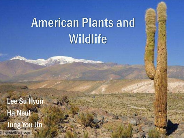 American plants and wildlife