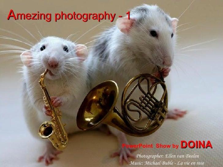 A mezing photography - 1   PowerPoint  Show by  DOINA Photographer: Ellen van Deelen Music: Michael Buble - La vie en rose