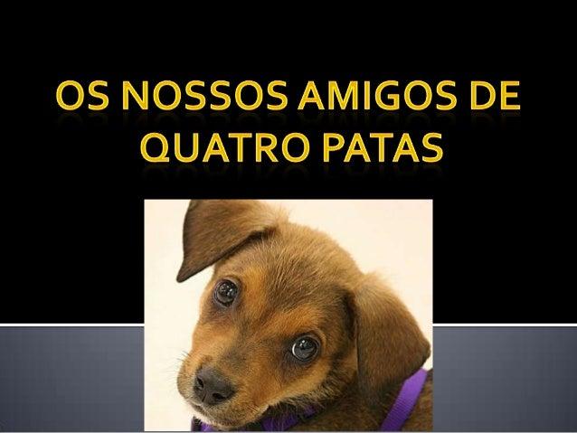 No entanto, é pouco comum que os donos queadquiram animais, mesmo que doentes, tenhamcoragem de devolvê-los ou queiram o s...