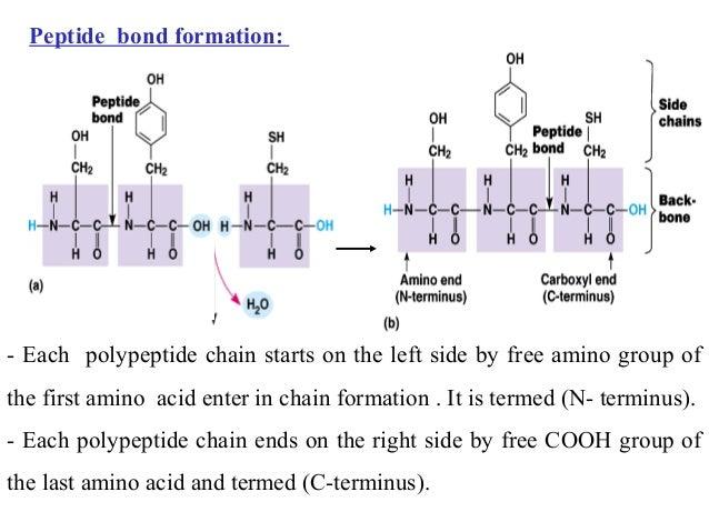 Peptide Synthesis Custom Peptide Peptide Coupling