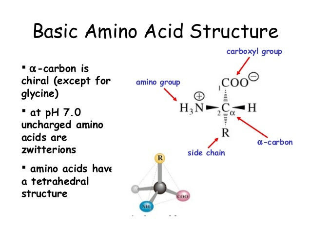Chapter 3(part1) - Amino acids, peptides, and proteins