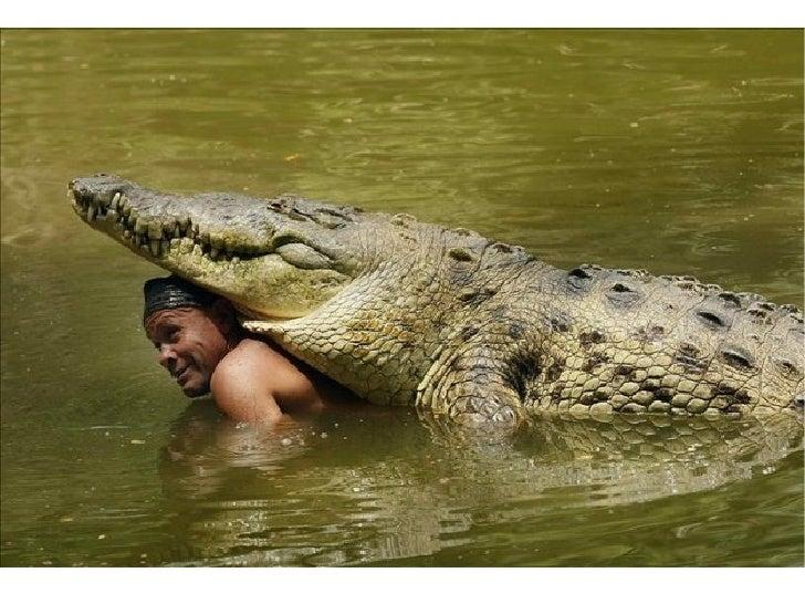 Amistad entre pescador y cocodrilo