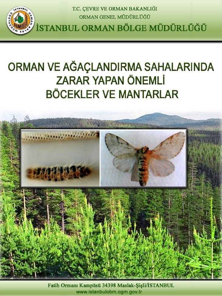İÇİNDEKİLERThaumetopoea pityocampa                           1(Çam Keseböceği)Lymantria dispar                            ...
