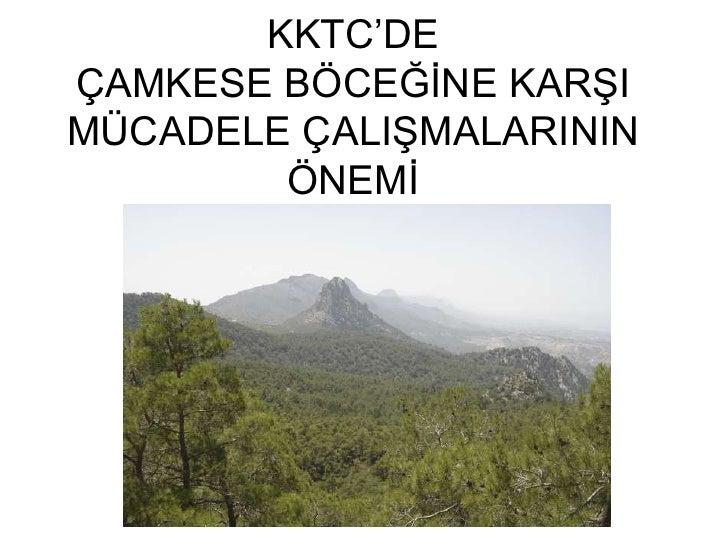 KKTC'DEÇAMKESE BÖCEĞĠNE KARġIMÜCADELE ÇALIġMALARININ        ÖNEMĠ
