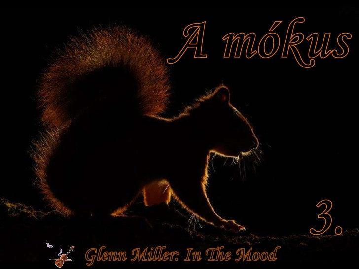 A mókus 3 (The Squirrel 3)