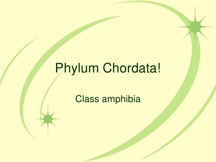 Phylum Chordata!   Class amphibia