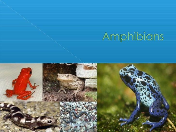    An amphibian is a vertebrate that is    ectothermic and spends its early life in    water and adult life on land.   A...