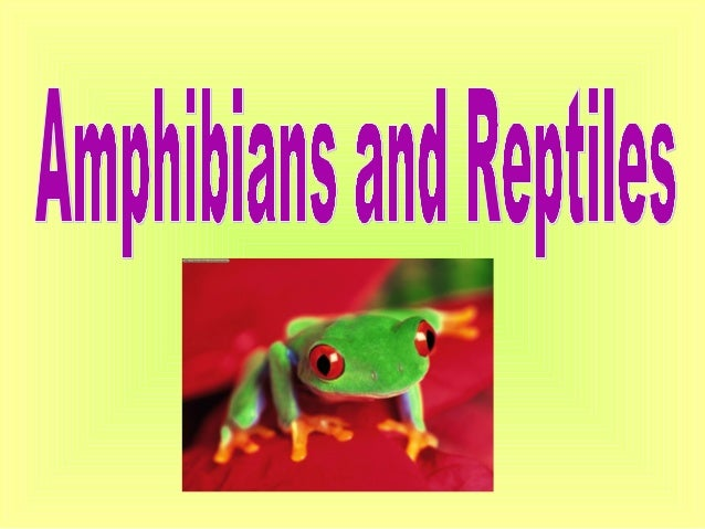 Amphibians• Amphibians are  animals that can live in  water and have lungs  and legs• Scientists think that  amphibians ev...
