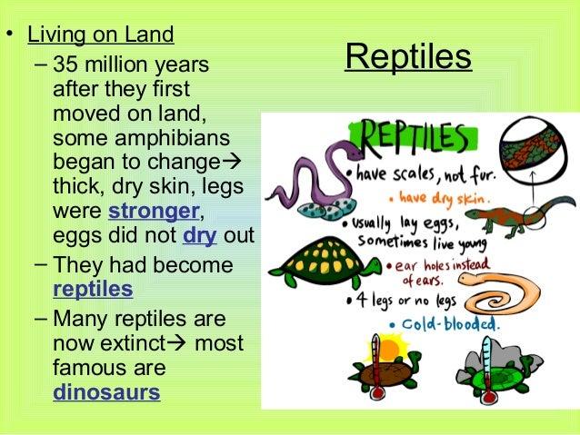 Reptile  Circulatory system  Britannicacom