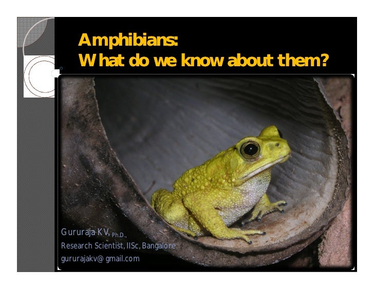 Amphibians: What do we know about them?