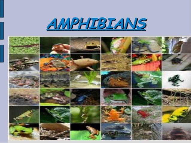 AMPHIBIANSAMPHIBIANS