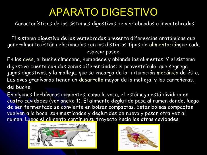 APARATO DIGESTIVO  Características de los sistemas digestivos de vertebrados e invertebrados  El sistema digestivo de los...