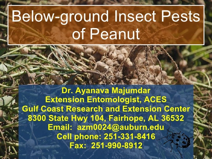 Below-ground Insect Pests of Peanut Dr. Ayanava Majumdar Extension Entomologist, ACES Gulf Coast Research and Extension Ce...