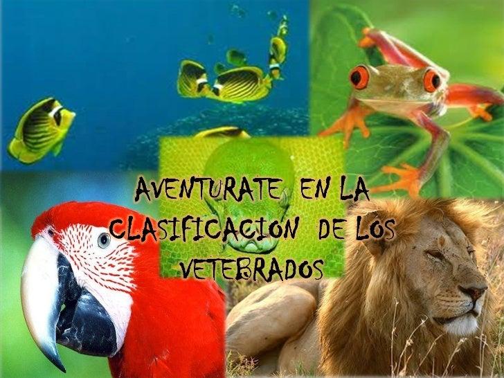 clasificacion de los vertebrados