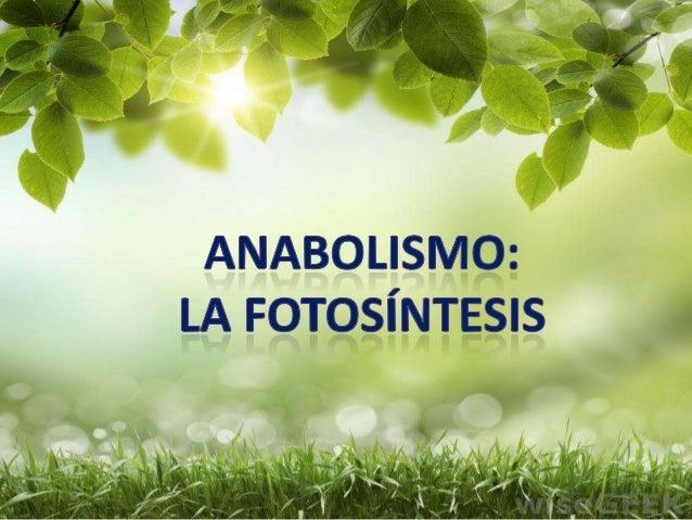 Anabolismo la fotosíntesis