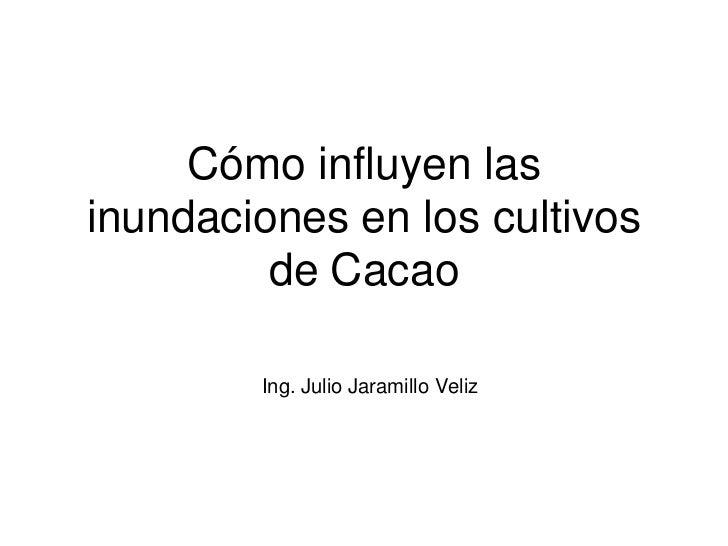 Cómo influyen lasinundaciones en los cultivos         de Cacao        Ing. Julio Jaramillo Veliz
