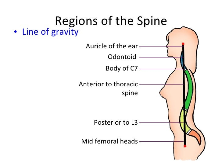 Spine Definition Of Spine By Merriamwebster 2473367 Pacte Contre