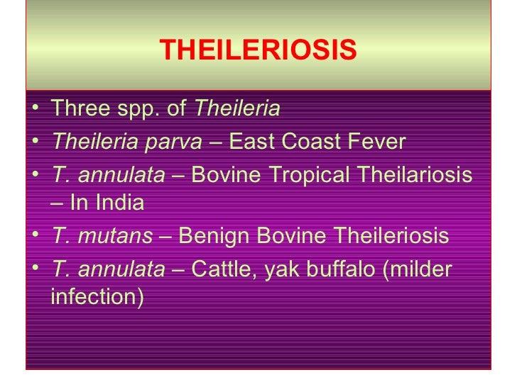 THEILERIOSIS   <ul><li>Three spp. of  Theileria  </li></ul><ul><li>Theileria parva  – East Coast Fever </li></ul><ul><li>T...