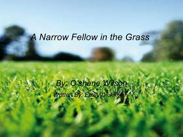 an analysis of emily dickinsons a narrow fellow in the grass Emily dickinson, in her poem, a narrow fellow in the grass, appears to write in a way that could be referred to as a nursery rhyme for a child, with its six stanzas.