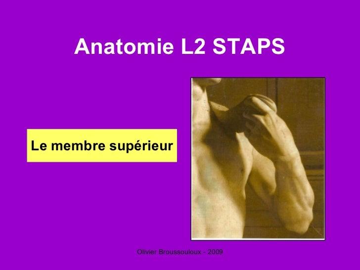 Anatomie L2 STAPS <ul><li>Le membre supérieur </li></ul>