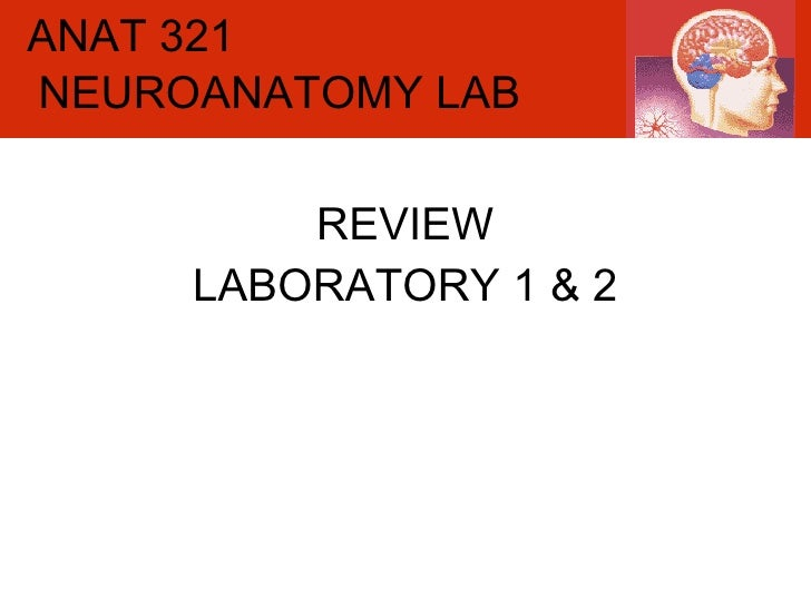 ANAT 321 REVIEW LABORATORY 1 & 2 NEUROANATOMY LAB