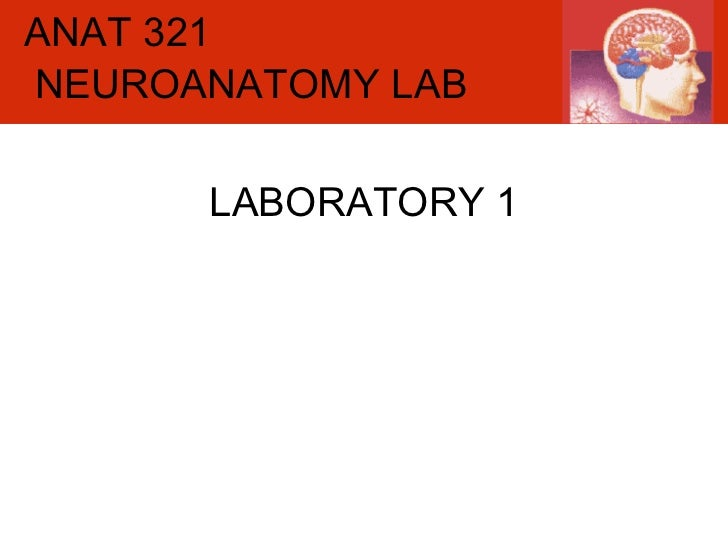 ANAT 321 LABORATORY 1 NEUROANATOMY LAB