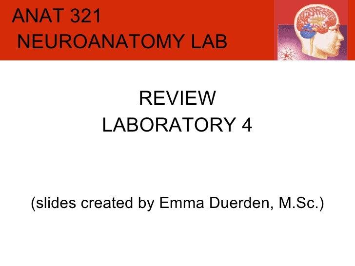 ANAT 321 REVIEW LABORATORY 4 (slides created by Emma Duerden, M.Sc.) NEUROANATOMY LAB