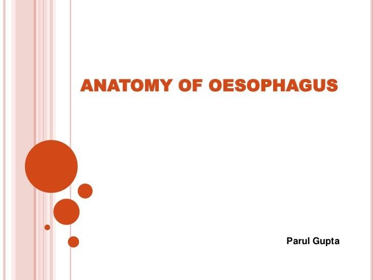 ANATOMY OF OESOPHAGUS                Parul Gupta