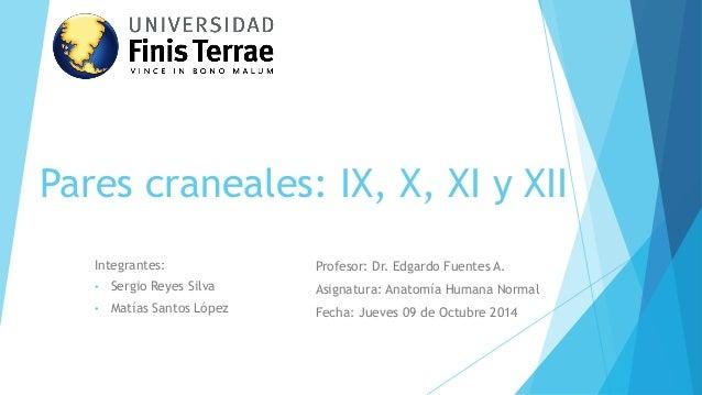 Pares craneales: IX, X, XI y XII  Integrantes:  •Sergio Reyes Silva  •Matías Santos López  Profesor: Dr. Edgardo Fuentes A...