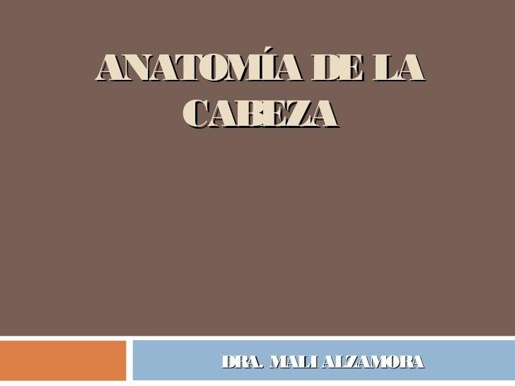 ANATOMÍA DE LA   CABEZA     DRA. MALI ALZAMORA