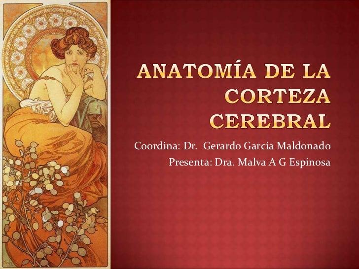 Coordina: Dr. Gerardo García Maldonado      Presenta: Dra. Malva A G Espinosa