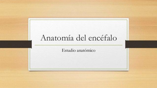 Anatomía del encéfalo Estudio anatómico