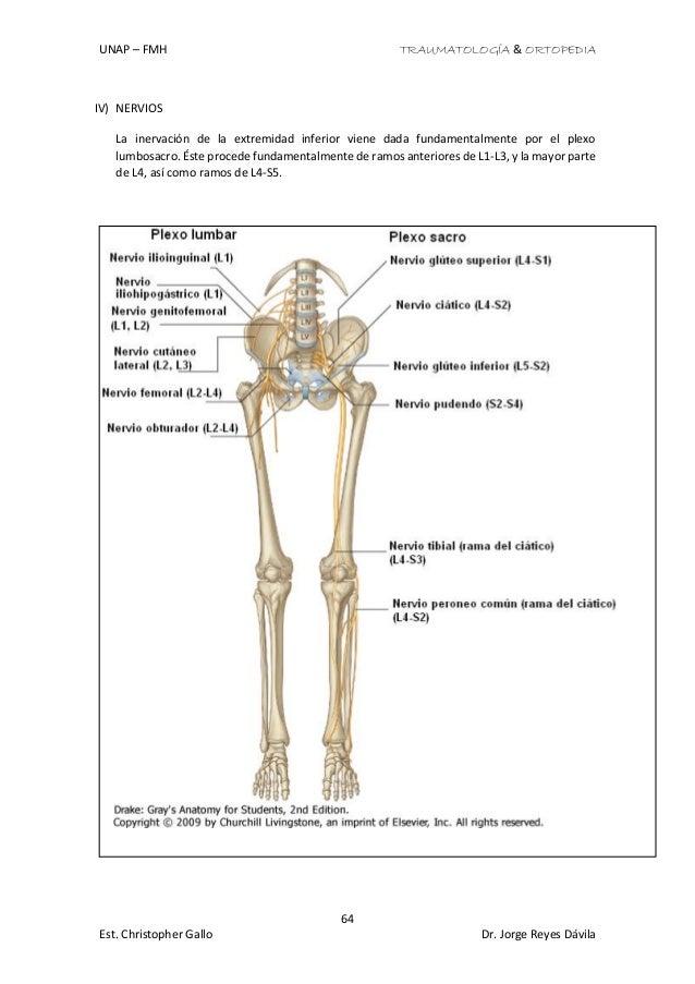 Excelente Nervios De La Anatomía De Las Extremidades Superiores ...