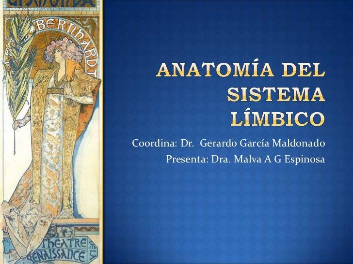 Anatomía del sistema límbico