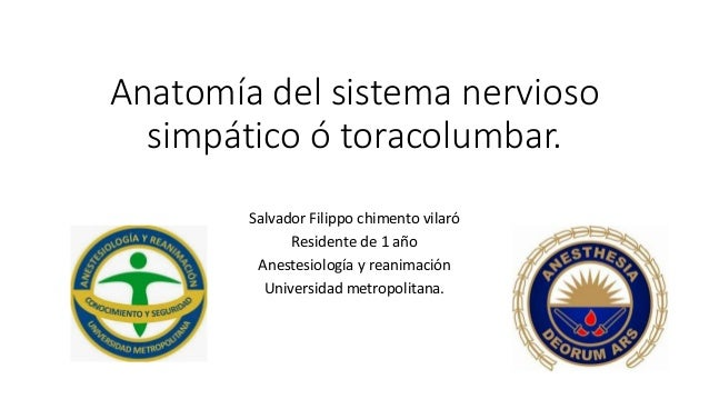 Anatomía del sistema nervioso simpático ó toracolumbar. Salvador Filippo chimento vilaró Residente de 1 año Anestesiología...
