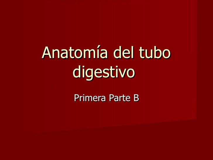 Anatomía del tubo digestivo  Primera Parte B