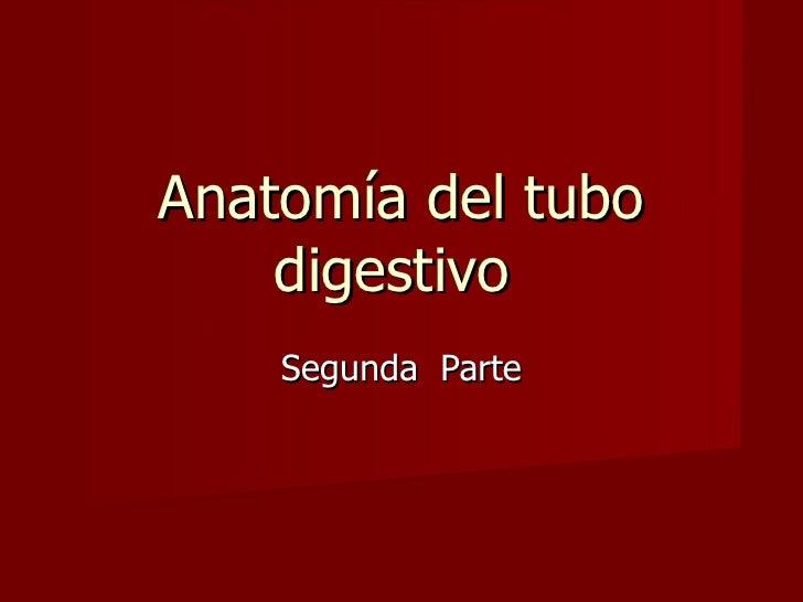 Anatomía del Tubo Digestivo Segunda Parte