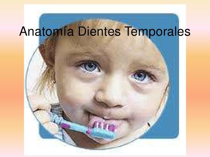 Anatomía dientes temporales