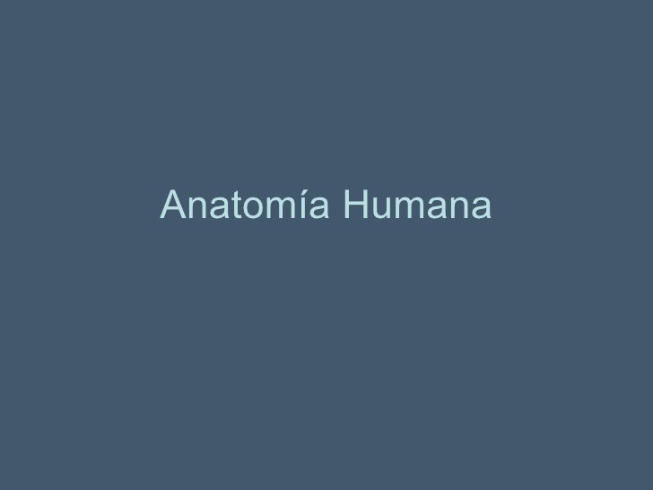 Anatom+¡a humana(dibujos)