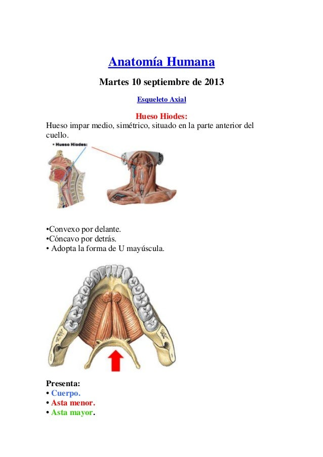 Anatomía osteología columna vertebral